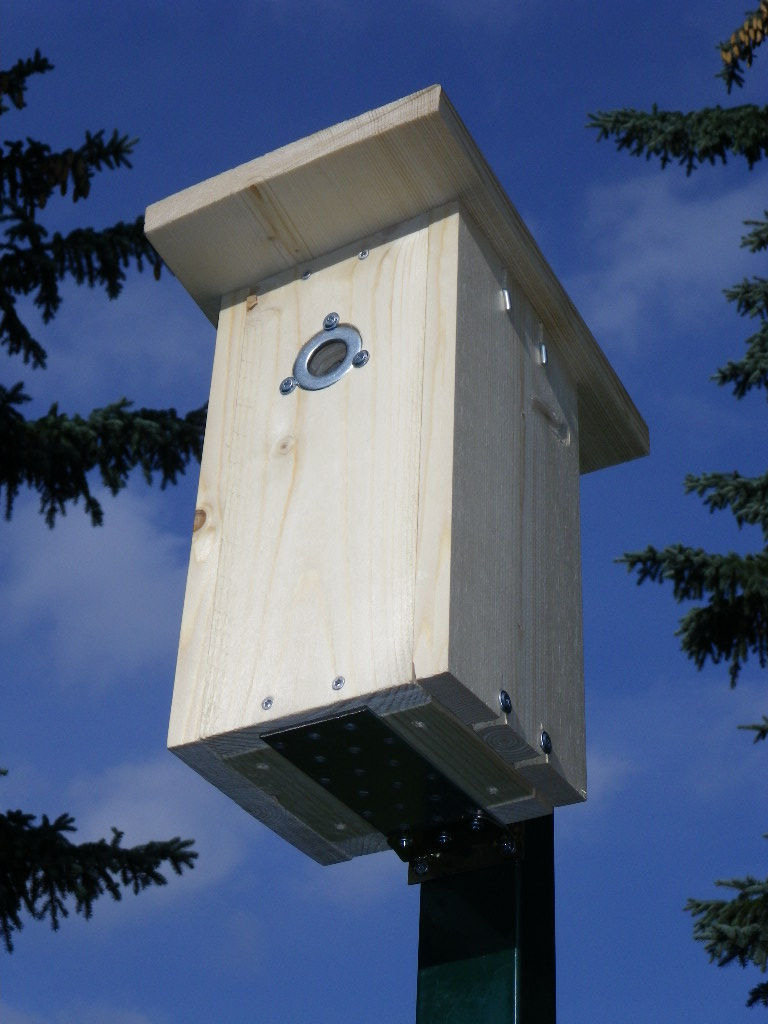 Nest-box.jpg