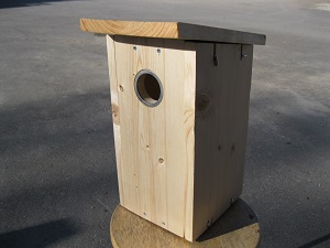 Woodpecker_and starling_nestbox
