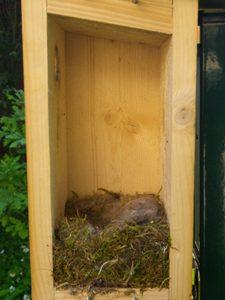 Empty nest after nesting 1